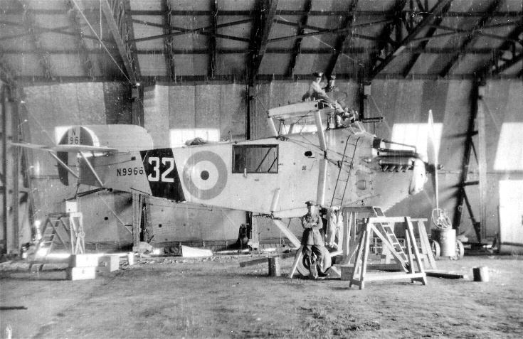 Bison at Novar, 1927