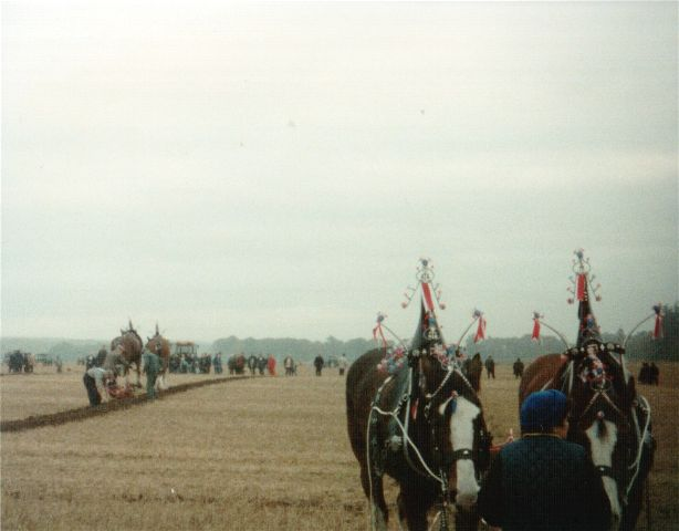 Ploughing Competition